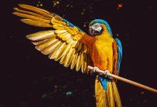 Photo of Papugarnia – miejsce uwielbiane przez dzieci