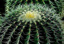 Photo of Kaktusiarnia – magiczny świat roślin