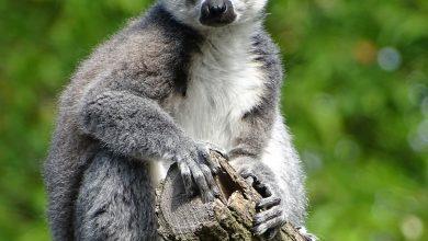 Photo of Lemur Park – atrakcja dla całej rodziny