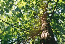 Photo of Co znajdą w Redzie miłośnicy przyrody?